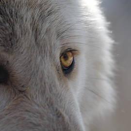 Patsy Zedar - White Wolf 8