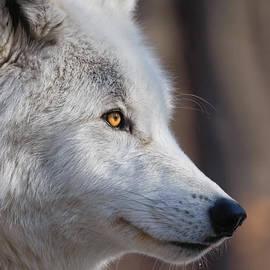Patsy Zedar - White Wolf 9