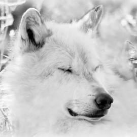 Athena Mckinzie - White Wolf Shut Eye