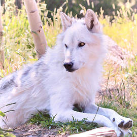Athena Mckinzie - White Wolf Taking It Easy