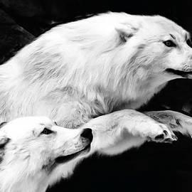Dennis Stewart - White Wolves