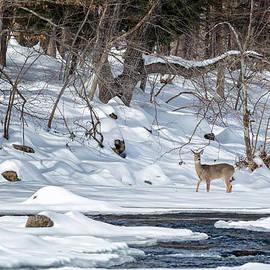 Bill Wakeley - Whitetail Deer Winter