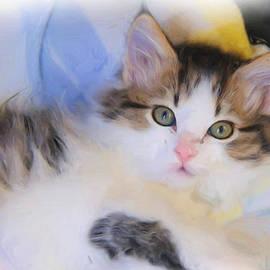 Kenny Francis - Wide Eyed Kitten