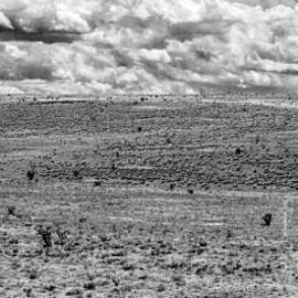Roselynne Broussard - Wide Open Space New Mexico