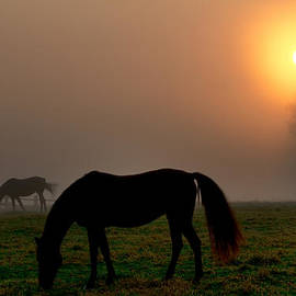 Bill Cannon - Widener Horse Farm at Sunrise