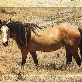 Janice Rae Pariza - Wild Colorado Horse