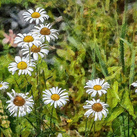 Gene Healy - Wild daisies