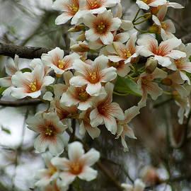 Kim Pate - Wild Flowering Beauty