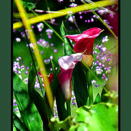 Joseph Coulombe - Wild Flowers Captured