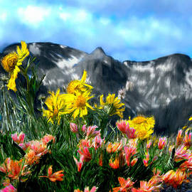 Bruce Nutting - Wild Flowers in the Moutains