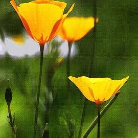 Tom Janca - Wild Flowers Of Arizona