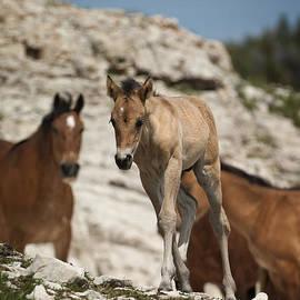 Wildlife Fine Art - Wild Horses-animals-image-11