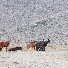Maria Jansson - Wild Horses at The Virginia Range