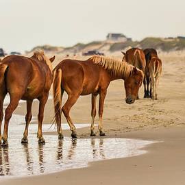 Bonnie Leigh Delar - Wild Horses