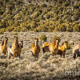 Janis Knight - Wild Horses of Smith Creek Valley
