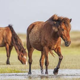 Bob Decker - Wild Horses on a Walk Across the Flats