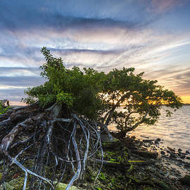 Debra and Dave Vanderlaan - Wild Mangroves