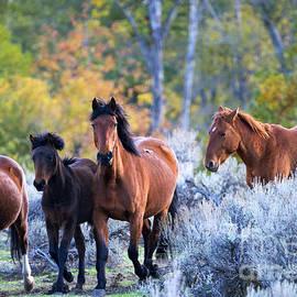 Mike Dawson - Wild Mustang Autumn