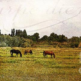Janice Rae Pariza - Wild Mustangs Carpe Diem