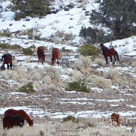 Bobbee Rickard - Wild Mustangs in a Nevada Winter