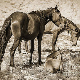 Janice Rae Pariza - Wild Mustangs of the West