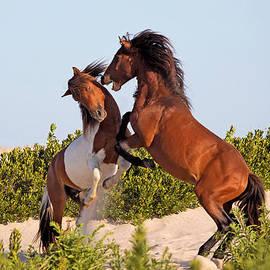 Jack Nevitt - Wild Ponies Fighting