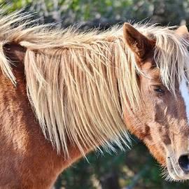 Kim Bemis - Wild Ponies of Assteague 20