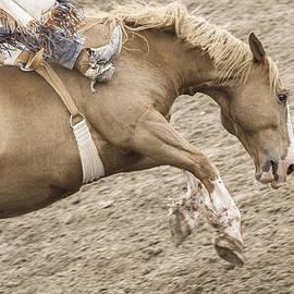 Caitlyn  Grasso - Wild Ride