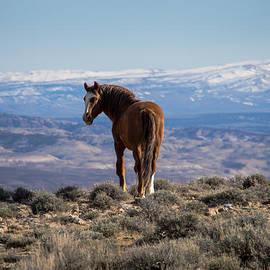 Nadja Rider - Wild Stallion of Sand Wash Basin