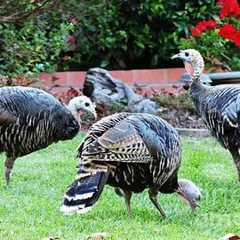 Leslie Hunziker - Wild Turkeys