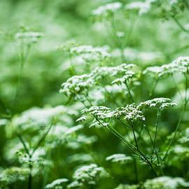 Alexander Senin - Wild Vegetation