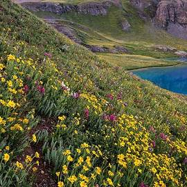 Mike Berenson - Wildflower Blues From Ice Lake Basin
