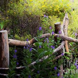 Elaine Manley - Wildflower Fence