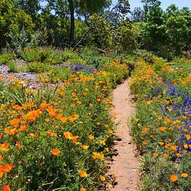 Lynn Bauer - Wildflower Meadow Path