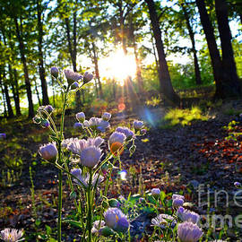 Debbie Portwood - Wildflower Sunset