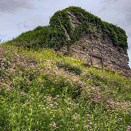 Gene Walls - Wildflowers and Vines Surround the Loyalsock Stonework Lime Kiln