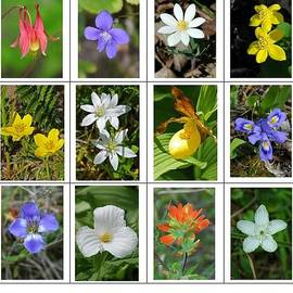 Dave Goggin - Wildflowers of Door County