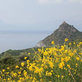Christine Rivers - Wildflowers On Capri