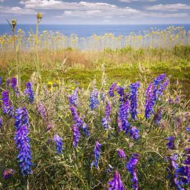 Elena Elisseeva - Wildflowers on ocean coast