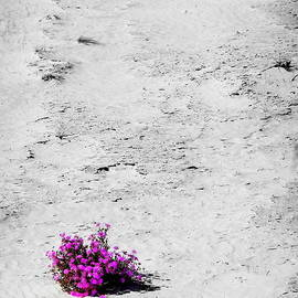Tim Richards - Wildflowers on White Sands