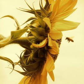 Douglas MooreZart - Will you still love bee tomorrow