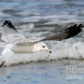 Geoff Crego - Wind Beneath My Wings