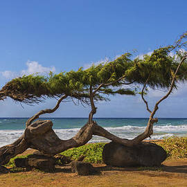 Brian Harig - Wind Blown Tree 2 - Kauai Hawaii