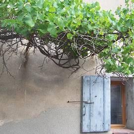 Thierry Borcy - Window and Vine