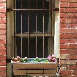 Liane Wright - Window Dressing