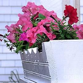 Janice Drew - Windowbox of Petunias