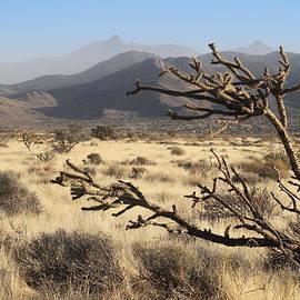 Valerie Loop - Windy Desert