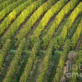 Heiko Koehrer-Wagner - Wine acreage in Germany