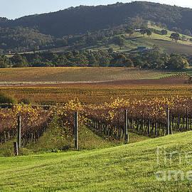 Joy Watson - Winery- View-australia-victoria
