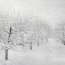 Sharon Coty - Winter Apple Orchard